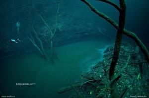 セノーテ・アンジェリタの水中写真 1