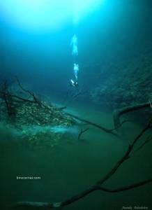 セノーテ・アンジェリタの水中写真 2