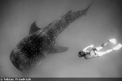 DivePhotoGuide_Tobias_Friedrich_3rd_May
