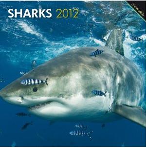 Sharks 2012 Calendar