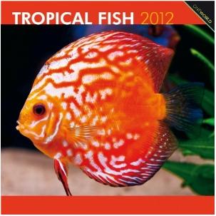 Tropical Fish 2012 Calendar
