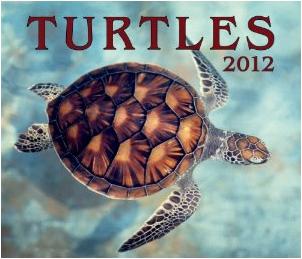 Turtles 2012 Calendar (Wall Calendar)