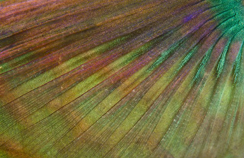 wetpixel_Parrotfish_line
