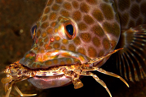 wetpixel_Sated Grouper
