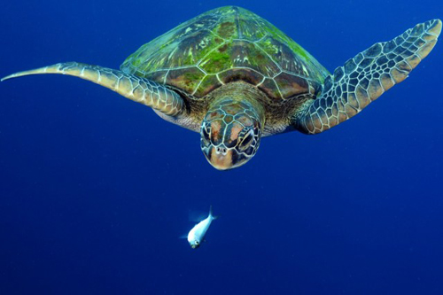 wetpixel_Turtle Snack