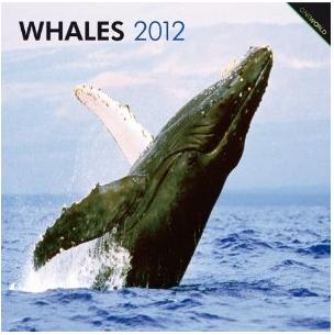 Whales 2012 Calendar