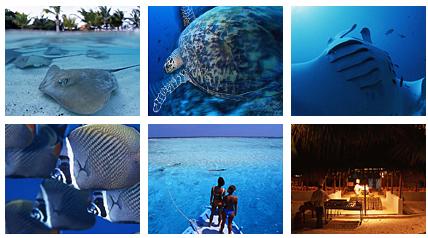 インド洋に浮かぶ島々 モルディブ