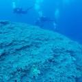 久米島で発見されたサンゴの大群集