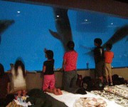 次の記事: 夜の水族館に泊まれるワクワク企画!鹿児島の水族館