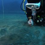 レアなツバクロエイ。魚種が豊富な熱海はフィッシュウオッチングにも最適