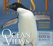 前の記事: 世界的なネイチャー誌のフォトコン・Ocean Views作品
