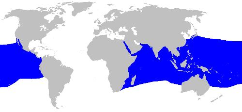 ニタリの世界的な分布図