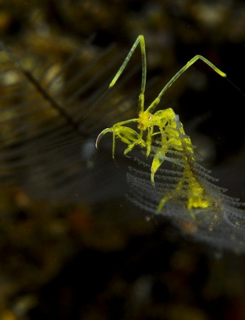 Wetpixel ALF---Alien Life Form