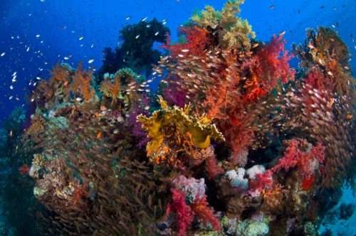 Colors in Red Sea
