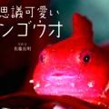 「不思議可愛いダンゴウオ」(佐藤長明)