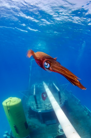 wetpixel Attack of the Giant Squid