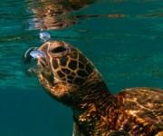 前の記事: Wetpixel今週の水中写真ベスト3 – テーマは「泡のマ