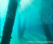 前の記事: 沖縄の水中写真展「沖縄うみ散歩」で売上の一部を義援金に