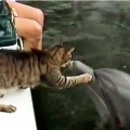 イルカと猫が戯れる動画
