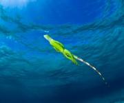 次の記事: Wetpixel今週の水中写真ベスト3 – テーマは「水面の