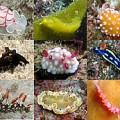 OWS「貝殻を脱いだ巻き貝 ウミウシの生きる道」中野理恵