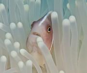 次の記事: Wetpixel今週の水中写真ベスト3 – テーマは「片利共
