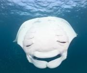 次の記事: Wetpixel今週の水中写真ベスト3 – テーマは「ユーモ