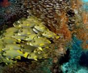 前の記事: Wetpixel今週の水中写真ベスト3 – テーマは「潮の流