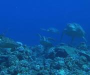次の記事: NHK「ダーウィンが来た!」で甲羅にカメラを乗せたウミガメの