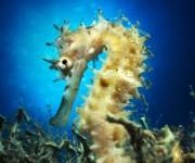 次の記事: Wetpixel今週の水中写真ベスト3 – テーマは「タツノ