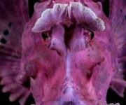 次の記事: Wetpixel今週の水中写真ベスト3 – テーマは「紫」