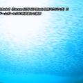 Canon EF 8-15mm F4 L Fisheye USMの水中写真・水中動画
