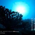 齊藤いほ子写真展「イコノメ〜ひかり」