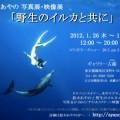 鈴木あやの写真展・映像展「野生のイルカと共に」
