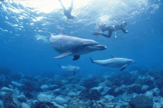 前の記事: イルカと遊ぶ! 御蔵島ゆったり&まったりツアー