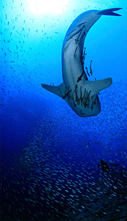 タイ・タオ島ダイビング