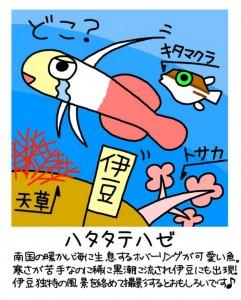 ふくちゃんのイラスト(ハタタテハゼ)