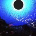 水中から撮影する金環日食(高知県・甲浦)