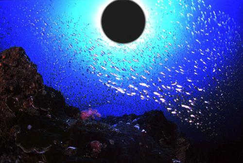 前の記事: 水中から金環日食を撮ろう!