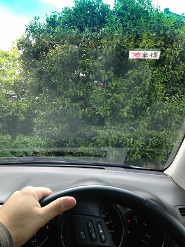 海外での交通運転