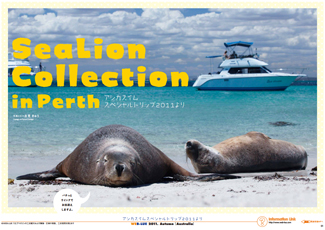 perth_sealion