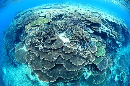 前の記事: タイのダイビングポイントで落書きされたサンゴが見つかり物議
