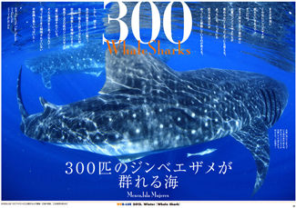 whalesharks_300