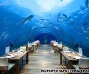 次の記事: 一度は行ってみたい世界の水中&海上スポット×8ヶ所