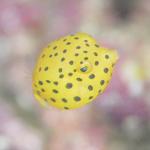 ミナミハコフグの幼魚。生物も豊富!
