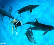 前の記事: 2012年バハマドルフィンクルーズ4週目終了。メキシコへ移動