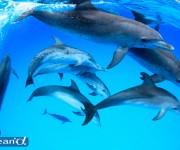 次の記事: 本日、7月1日「ocean+α」がグランドオープンしました!
