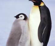 前の記事: 見てるだけで涼しくなる!南極渡航のべ33回の4人による写真展