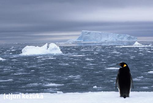 ウェッデル海アトカ湾のコウテイペンギン