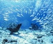 """前の記事: 南米の秘境の海。その第一印象は""""濃厚"""" 〜写真家・高砂淳二が"""